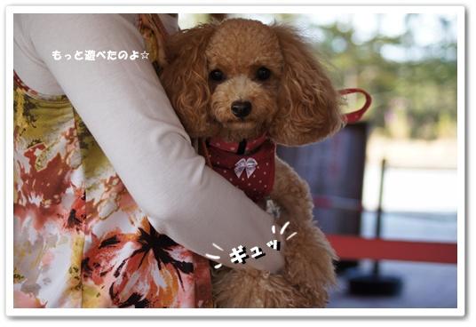 20111015yuzu5.jpg
