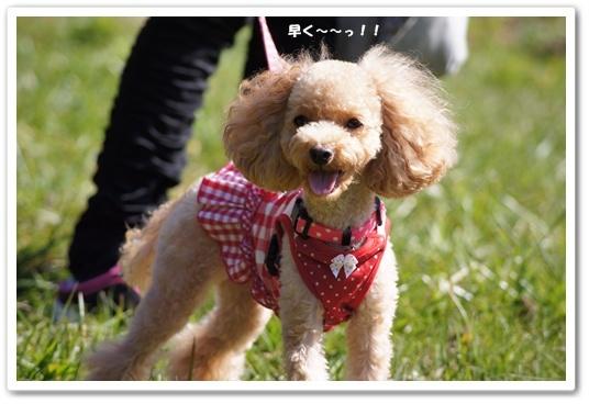 20111015yuzu6.jpg