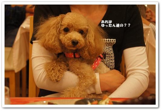 20111018yuzu1.jpg