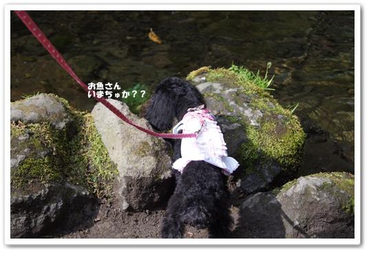 20111019kosyo1.jpg