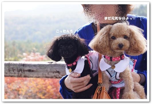 20111019yuzukosyo10.jpg