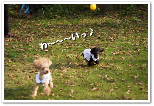 20111020yuzukosyo1.jpg