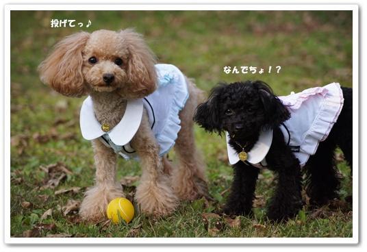 20111020yuzukosyo4.jpg