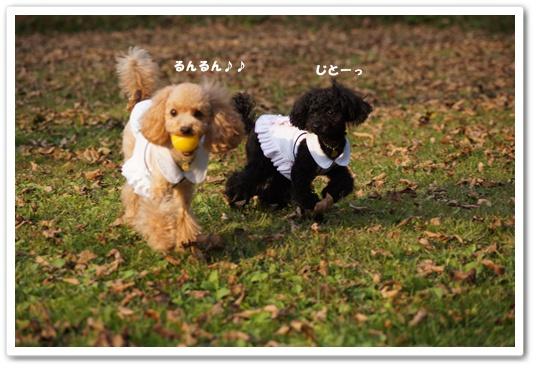 20111020yuzukosyo6.jpg