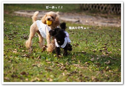 20111020yuzukosyo7.jpg