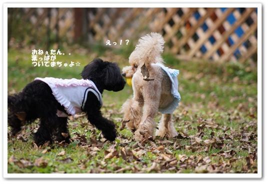 20111020yuzukosyo9.jpg