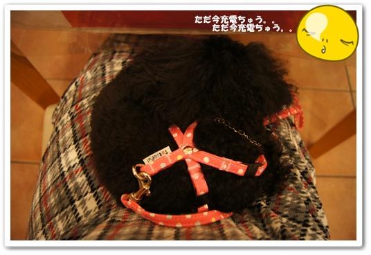 20111025kosyo3.jpg