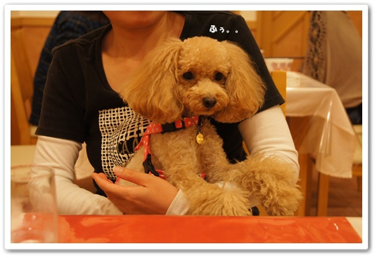 20111025yuzu3.jpg
