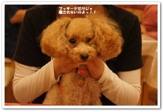 20111025yuzu4.jpg