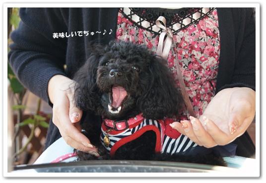 201110282kosyo5.jpg