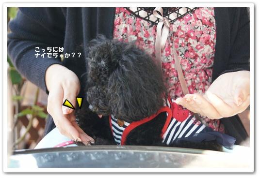 201110282kosyo6.jpg