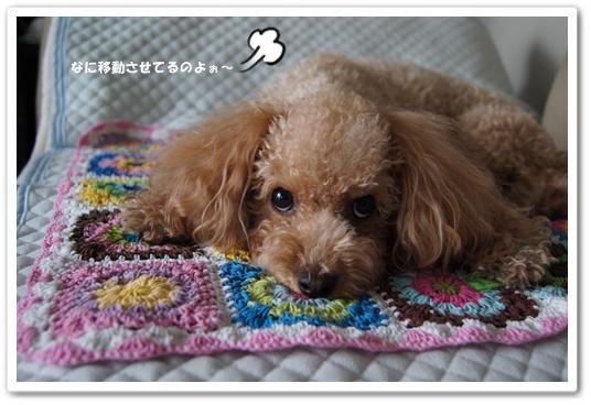 20111104yuzu6.jpg