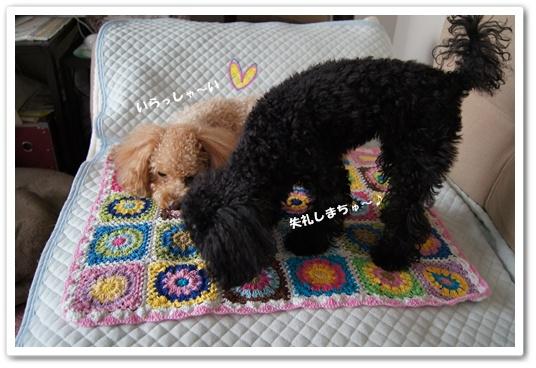 20111104yuzukosyo5.jpg