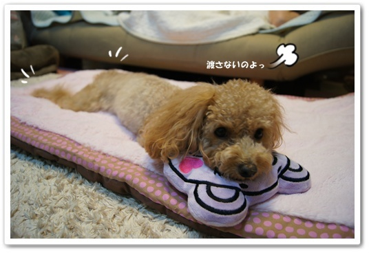 20111106yuzu4.jpg