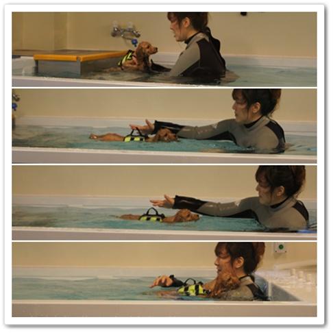 20111107yuzu11.jpg