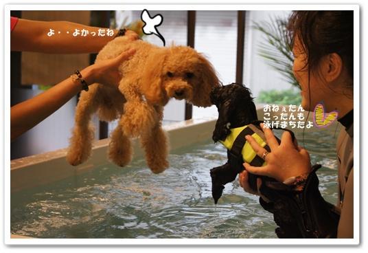 20111109yuzukosyo1.jpg