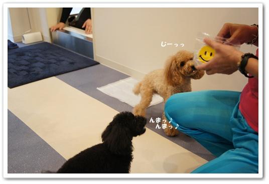 20111111yuzukosyo4.jpg