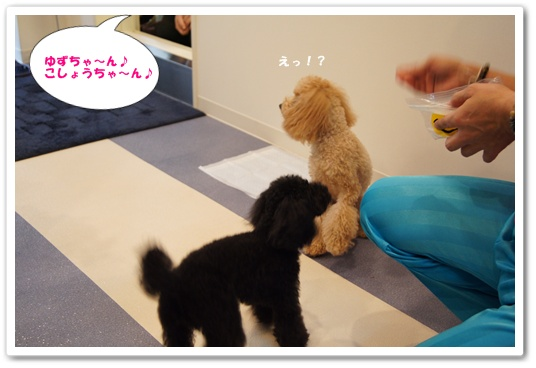 20111111yuzukosyo5.jpg