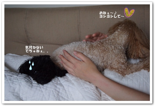 20111115yuzukosyo5.jpg
