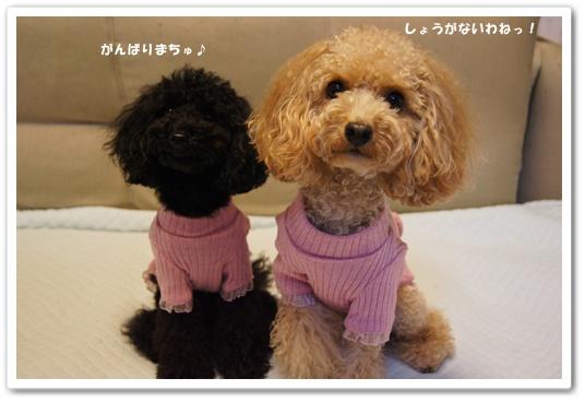 20111118yuzukosyo5.jpg