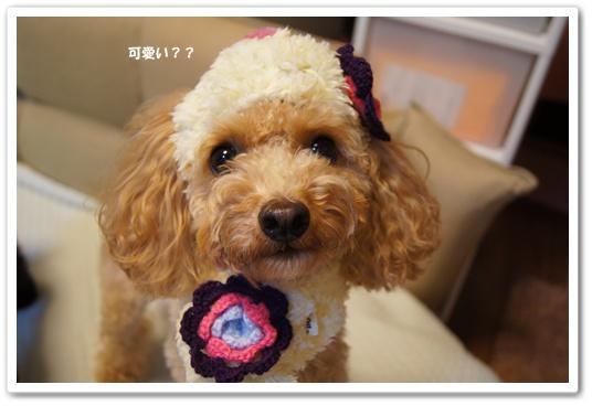 20111119yuzu1.jpg