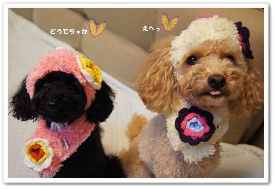 20111119yuzukosyo2.jpg