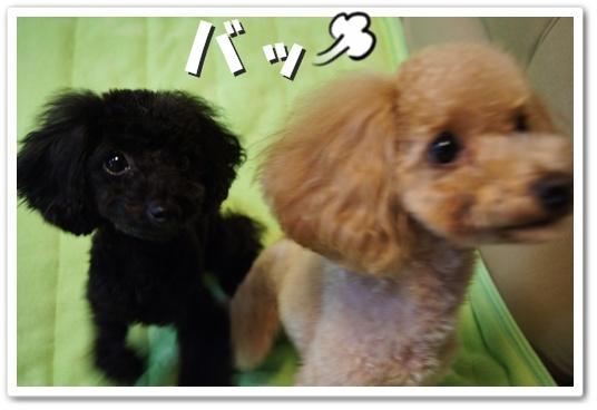 20111122yuzukosyo3.jpg