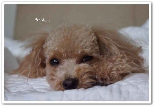 20111124yuzu3.jpg