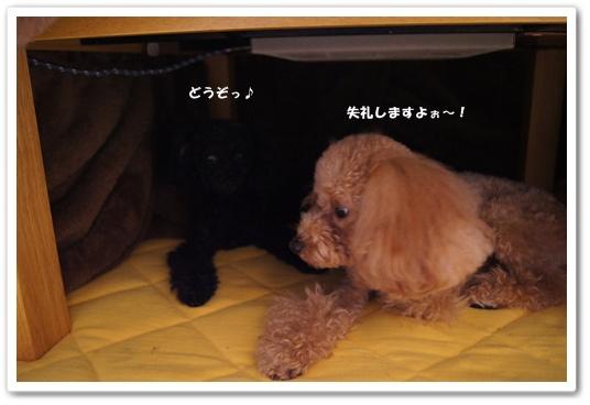 20111126yuzukosyo1.jpg