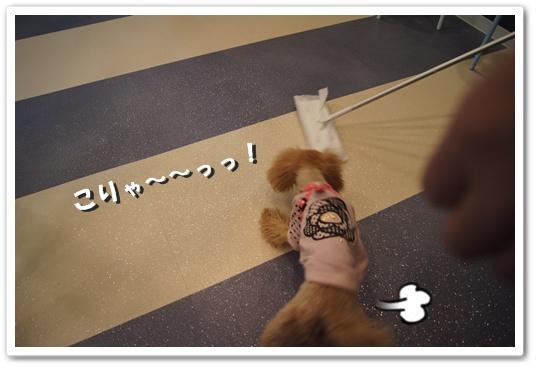 20111129yuzu1.jpg