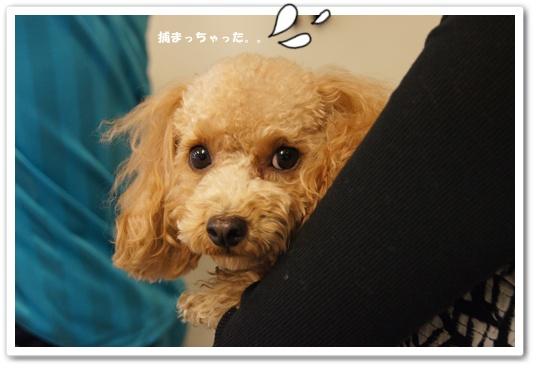 20111129yuzu3.jpg