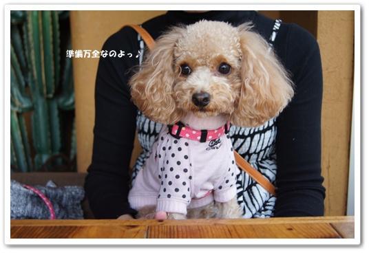 20111201yuzu1.jpg