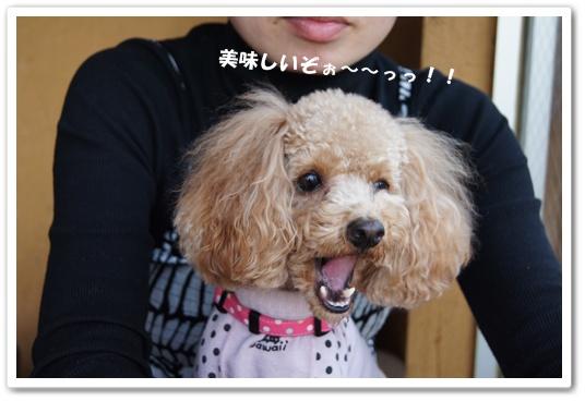 20111201yuzu5.jpg