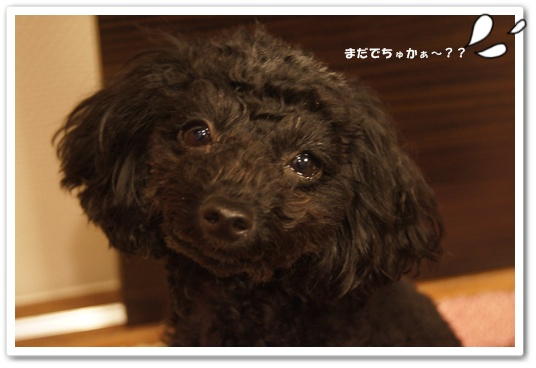 20111207kosyo1.jpg