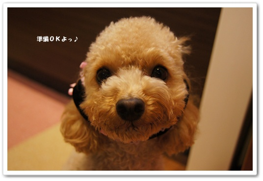 20111207yuzu4.jpg