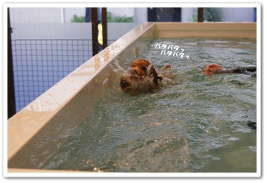 20111209yuzuk3.jpg