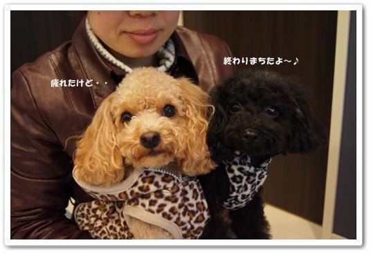 20111209yuzukosyo9.jpg