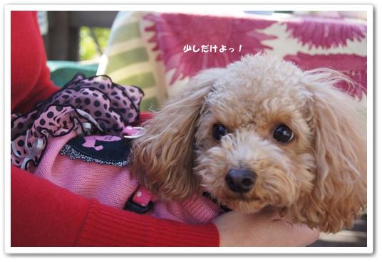20111214yuzu2.jpg