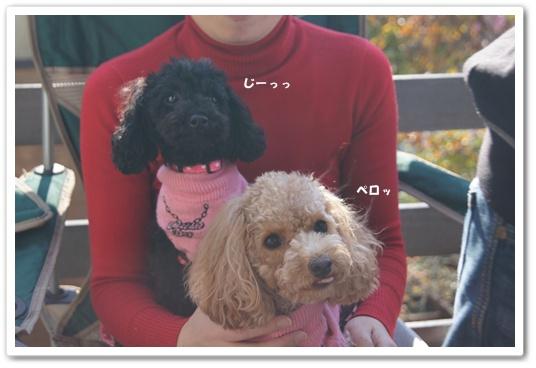 20111214yuzukosyo1.jpg