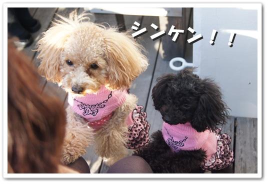 20111214yuzukosyo3.jpg