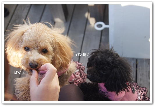 20111214yuzukosyo4.jpg