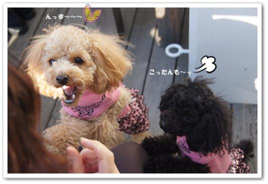 20111214yuzukosyo5.jpg