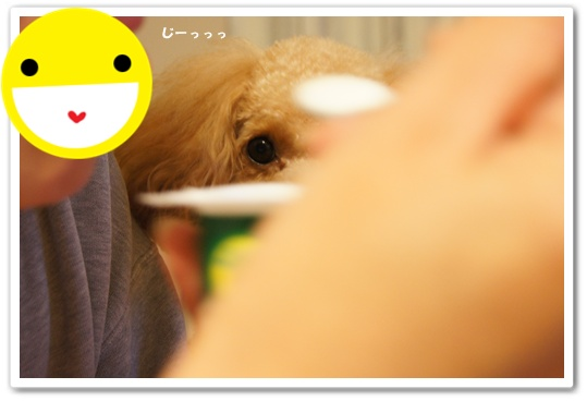 20111218yuzu1.jpg