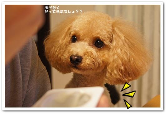 20111218yuzukosyo2.jpg