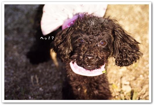 20111220kosyo2.jpg