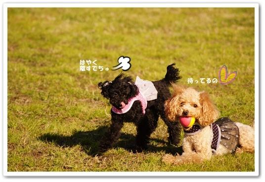 20111220yuzukosyo2k.jpg