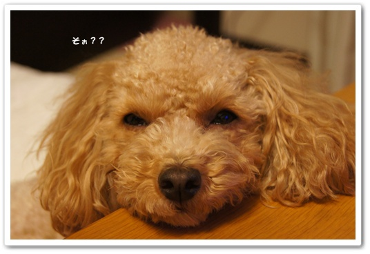 20111222yuzu2.jpg