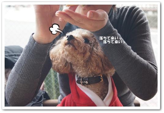 20111223yuzu2.jpg