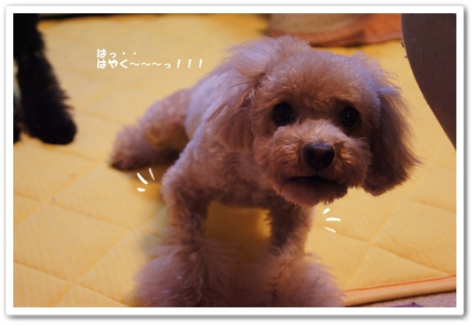 20111225yuzukosyo2.jpg