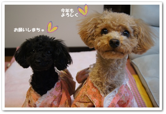 20120102yuzukosyo1.jpg